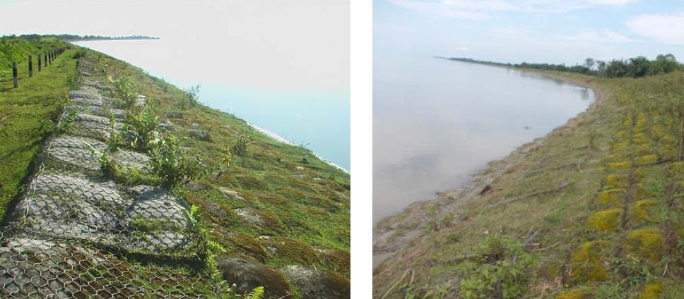 Túi địa kỹ thuật và thảm thực vật