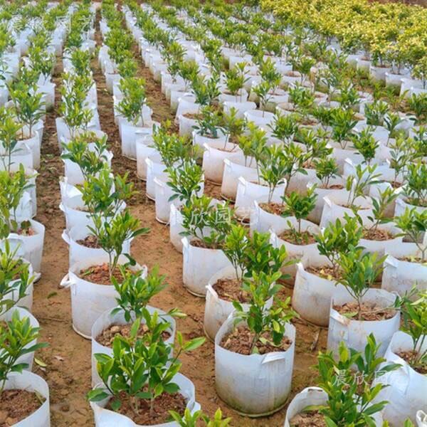 Túi vải trồng rau